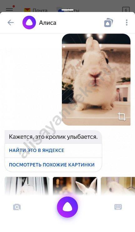 Алиса, что изображено на фото?